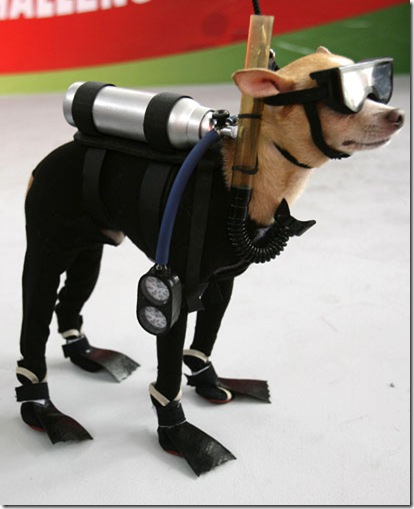 Under-Sea Dog