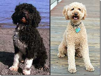 Obama dogs