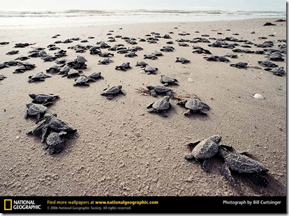 Click on image to download a National Geographic Wallpaper of this image by Bill Curtsinger