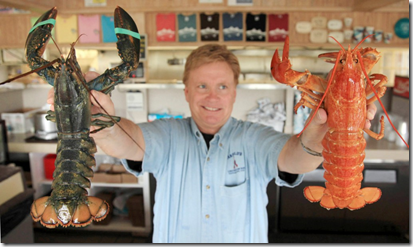 "AP Photo/Julia Cumes - Nathan Nickerson, owner of Arnold's Lobster and Clam Bar, holds up a rare ""yellow lobster,"" right, and a normally pigmented lobster, left, at Arnold's Lobster and Clam Bar in Eastham, Mass., on Cape Cod Wednesday, June 10, 2009. The female lobster, named ""Fiona"" by owner Nathan Nickerson, was recently caught off the coast of Prince Edward Island in Canada and given to Nickerson by a friend."