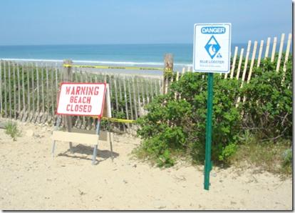 Beach Closed - Blue Lobster Alert
