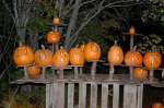 Pumpkins at Roger Williams Park Zoo, photo by Robert Guroff