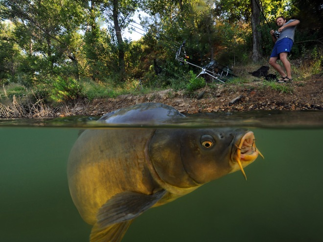 Carp Fishing by French photographer and biologist Laurent Ballesta